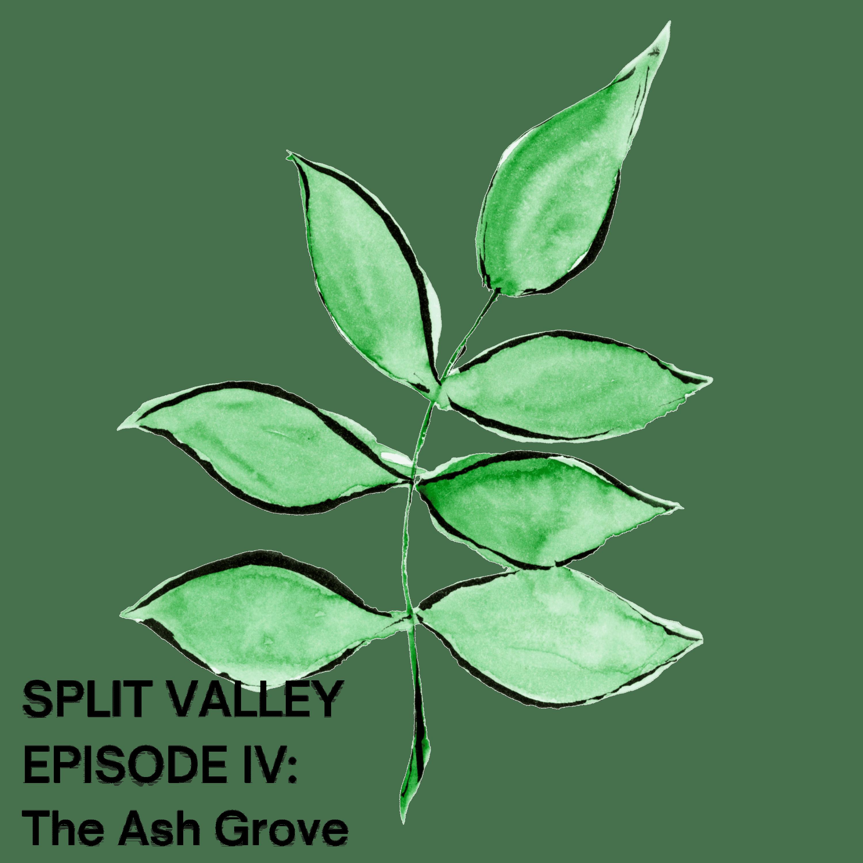 Episode IV: The Ash Grove